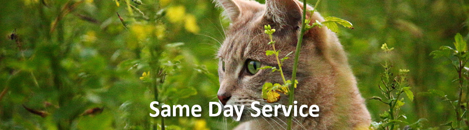Bamganie Pet Cremations - Same Day Service